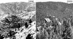 Photo of condition of a Colorado forest in 1896 and 2000.